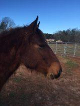 Mercy (mustang mare)